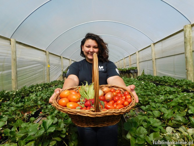 Pracownik szklarni z pomidorami - Holandia - od zaraz !