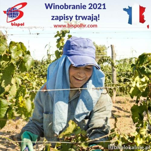 Francja - winobranie 2021 - zapisy
